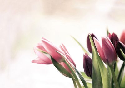 florist-01